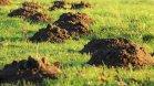 5 najúčinnejších spôsobov, ako sa zbaviť krtka v záhrade